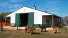 Colorado Alpaca Barn