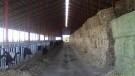 Colorado Dairy Freestall Barn